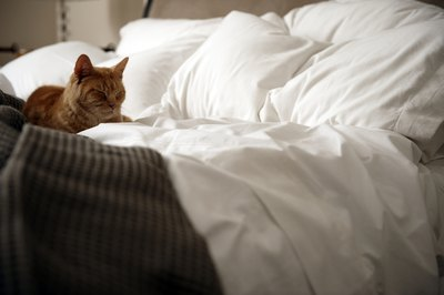 Antibiotics may cause your cat to try and sleep off the side effects.