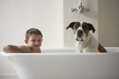 Shampoos formulated for dogs and those formulated for people are not interchangeable.