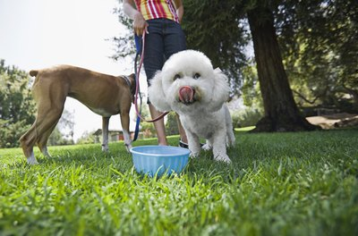 Proper hydration is vital for a happy and healthy pet.