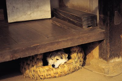 A comfy, safe dog bed can stop your dog's burrowing behavior.