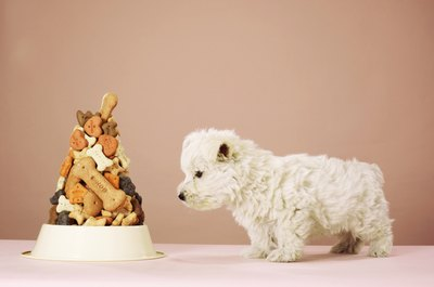 Sifting through the pile of treats to find your dog's favorite can be tricky.