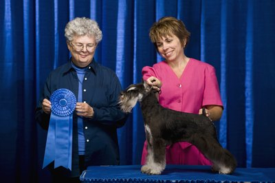 Your dog must be AKC-certified to compete in many dog shows.