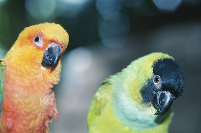 Parakeets are social creatures that form bonds.