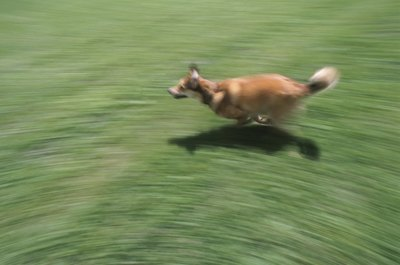 Some dogs just want to explore the world, while others simply enjoy running.
