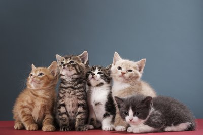 In young kittens, herpes virus requires veterinary care.
