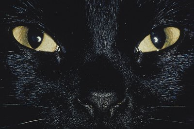 Cats' eyes are designed to see in dim light.