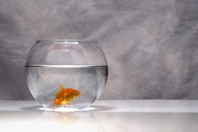 Even in a bowl, a goldfish needs a water filter to stay healthy.