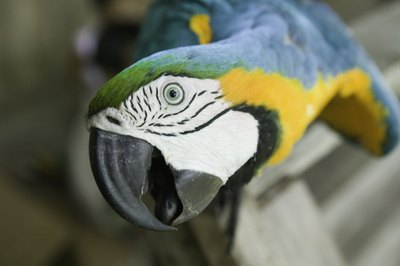 How to Look Up Bird Band Numbers for Parrots - Pets