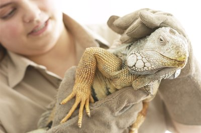 Zoologists love animals, no matter how scaly.