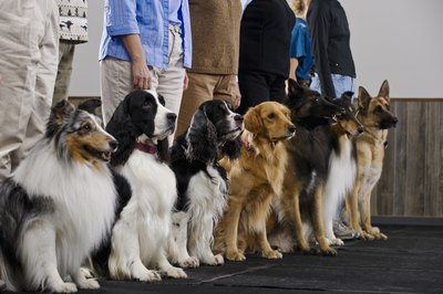 Training classes can quash the barking problem.
