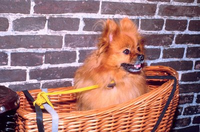 Hey, hey, there's an incredibly cute dog in this basket! Hey!