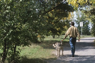 A dog run lets your dog play outside safely when you don't have time to take him for a walk.