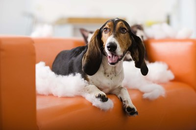 """I'm as amazed as you are! I was just sitting here and the whole sofa fell apart!"""