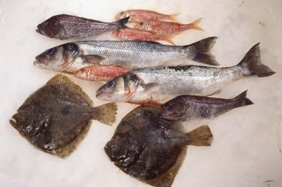 Striped bass is an excellent source of fish oils.