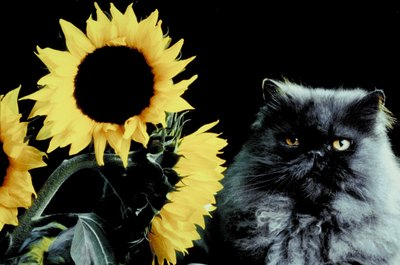 """I love sunflowers. They're so pretty -- and pretty tasty."""