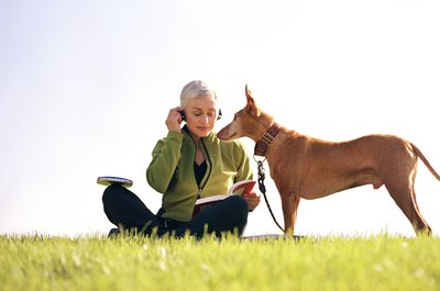 Companion dogs can be a great comfort to an older person and at the same time offer a bit protection.