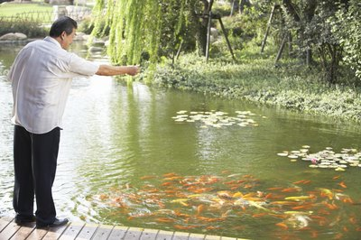 Aquaculturists must feed the fish under their care.