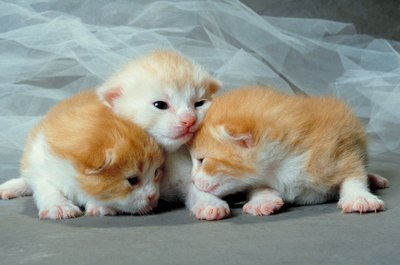 When it comes to newborn kittens, the mommy cat has everything covered.