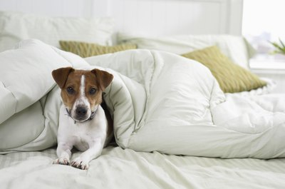 Keeping your pooch off the bed is as easy as closing a door.