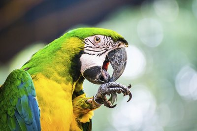 Keep chocolate out of your inquisitive parrot's reach.