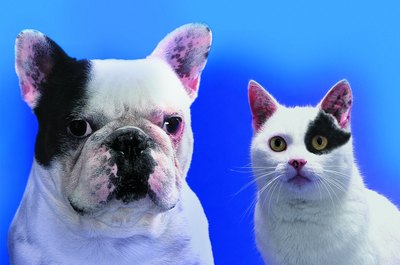 Your dog and cat each need their own flea control.