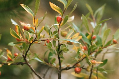 The root systems of native shrubs can help prevent runoff from your lawn.