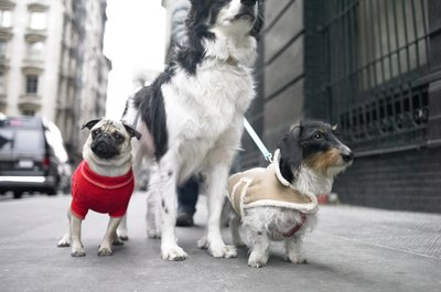 Sweaters can keep your pooch warm, while making her fashionable.