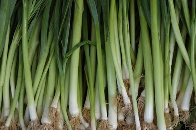 Scallions deliver many health benefits.