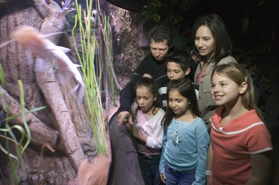 Hundreds of species of catfish feature in the aquarium hobby.