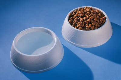A little warm water transforms hard kibble into mushy puppy food.