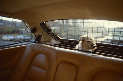 A barrier may help your whining dog feel safe.