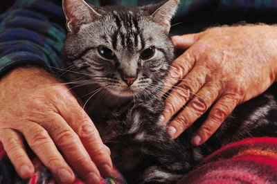 Commercial flea treatments may be harmful to senior cats.