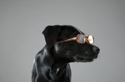 In the right situation, wearing glasses can benefit a dog.
