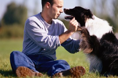 Regular grooming keeps a border collie's coat looking beautifully lustrous.