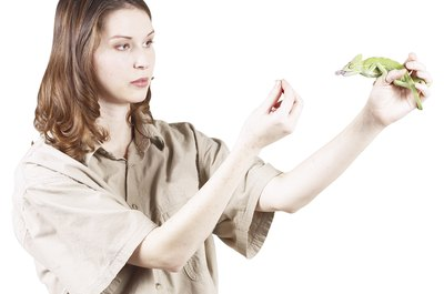 Zoologists can choose from more than a dozen career specialties.