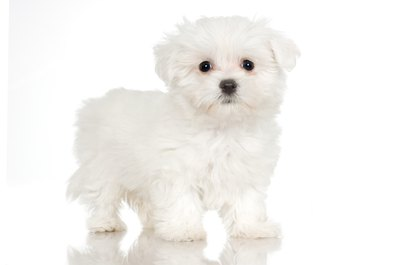 Don't let tear stains tarnish your pooch's snow-white fur.