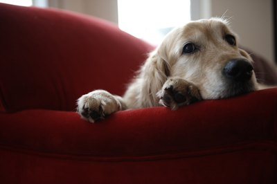 Experiencing a divorce can make your dog depressed.
