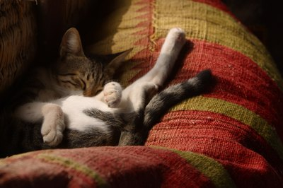 Kitty can sleep up to 18 hours a day.