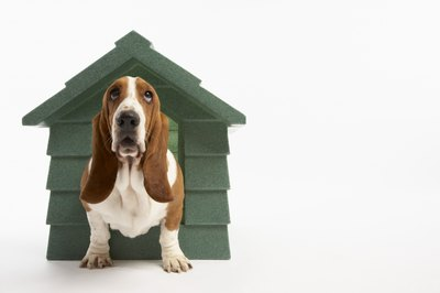 Don't let male dog behavior keep Fido in the doghouse.