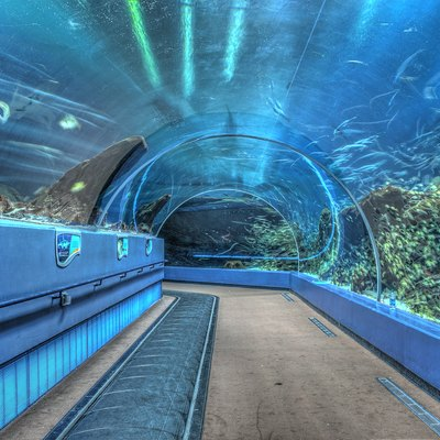 Ocean Voyager exhibit tunnel at the Georgia Aquarium