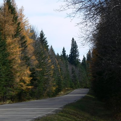 Tamaracks on the old Waskesiu highway.