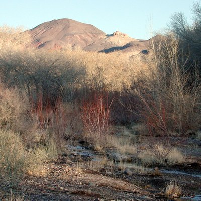 Amargosa River in Beatty, Nevada, looking upstream. Photo taken from where Valley Street ends at the river.
