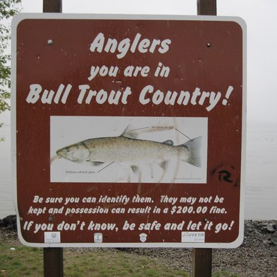 Sign for anglers regarding protection of bull trout (Salvelinus confluentus), Lake Pend Oreille, Sandpoint, Idaho