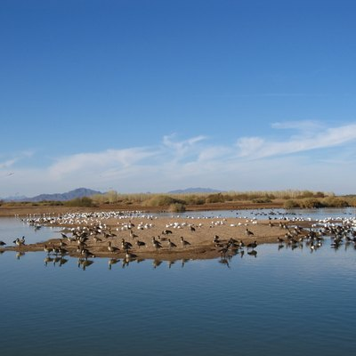 Waterfowl on Cibola National Wildlife Refuge, USA