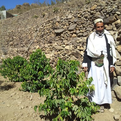 Coffee Plantation ,Yemen