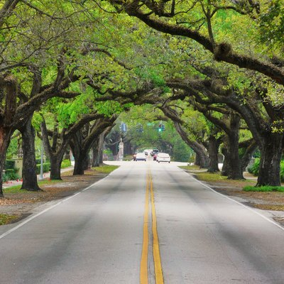 Coral Way, One Of The Many Scenic Roads Through The Gables