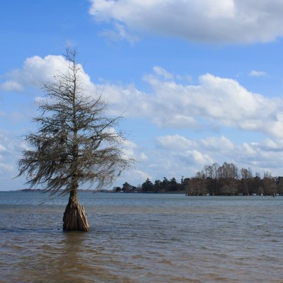 A lone Cypress tree in Lake Marion. Taken at Indian Bluff Park, in Eutawville, South Carolina, United States.