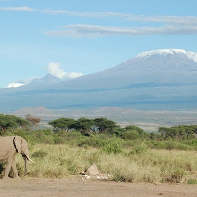The classic Tanzania shot: Elephant and Kilimanjaro