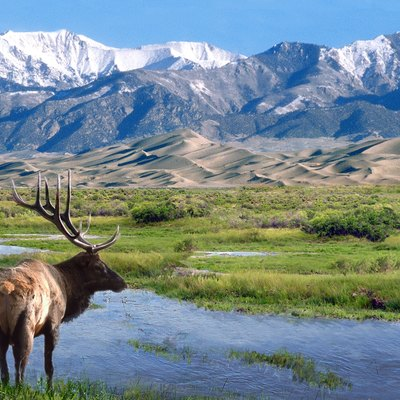 Bull elk at Big Spring Creek, Great Sand Dunes National Park & Preserve, CO Photo credit: NPS