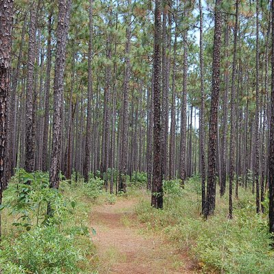 Hiking trail in Francis Marion National Forest — near Charleston, South Carolina.